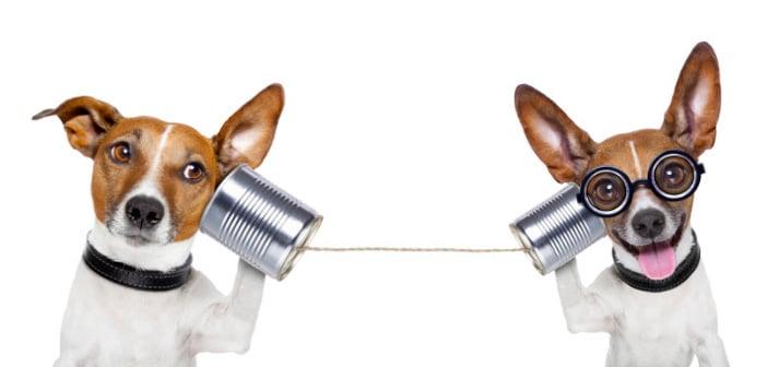 pet_shop_canali_comunicazione