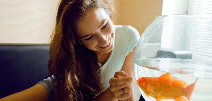 Hai l'attenzione di un pesce rosso